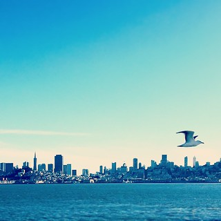 The #SanFranciscoBayBlues (with #Seagull) | by Shannon Badiee