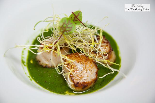 Seared scallops, broccoli rabe puree, crispy leeks