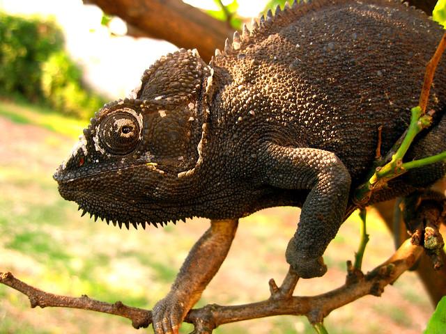 Madagascar1 - 03