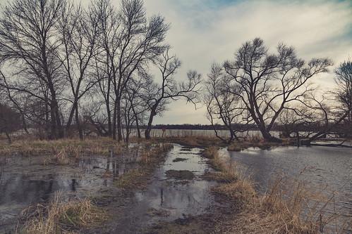 albertlealake april minnesota myrebigisland myrebigislandstatepark forest hike hiking hikingtrail marsh spring statepark trail trees wetland wetlands albertlea unitedstates us