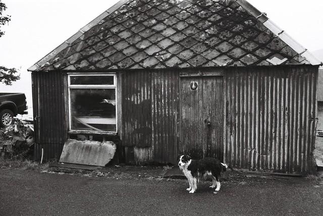 Dog (Lizzie), Milton, Applecross, Wester Ross