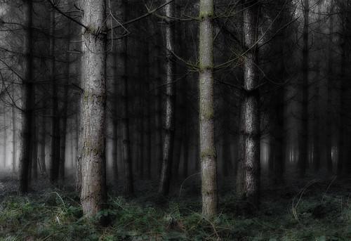trees light fog woodland dark landscape woods nikon moody foggy nikkor warwickshire wixford d7000 1685mmvr jactoll