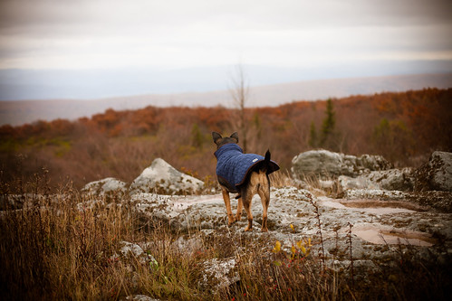 Snickers admiring the view... | by lifeinthedistrict