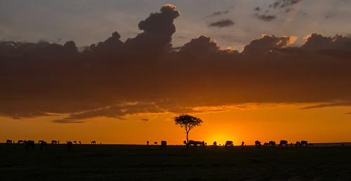 lumix kenya wildlife ngc kenia masaimara gm1