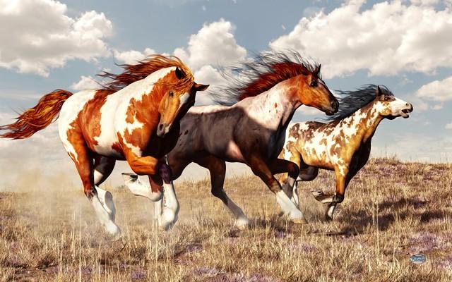 Galloping Mustangs