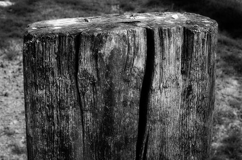 Thick Old Wood