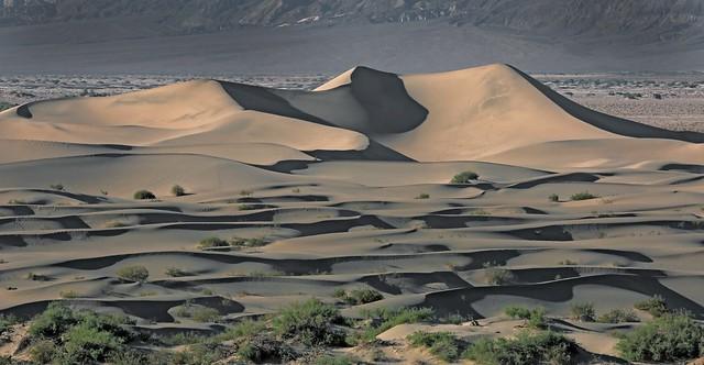 Mesquite Dunes at Sunset