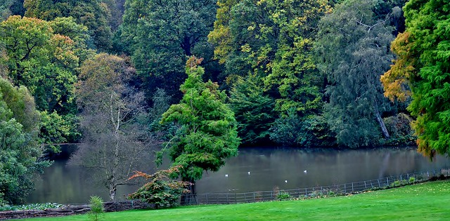 Kenwood's Pond and Woodlands, Hampstead, London