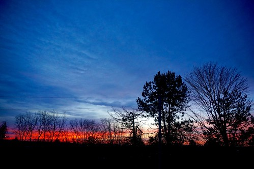 morning trees winter sky fall silhouette sunrise dawn cloudy michigan annarbor