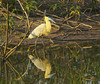 _DSC5190. Kalotthegre,  Araras Eco Lodge. Pantanal. by Berit Christophersen