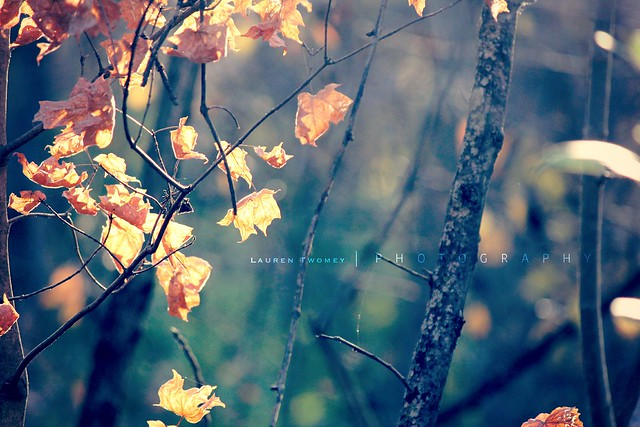 Copper leaves.