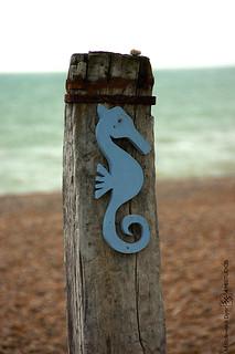 Scott Kelby Worldwide Photo Walk 2014 - Seahorse