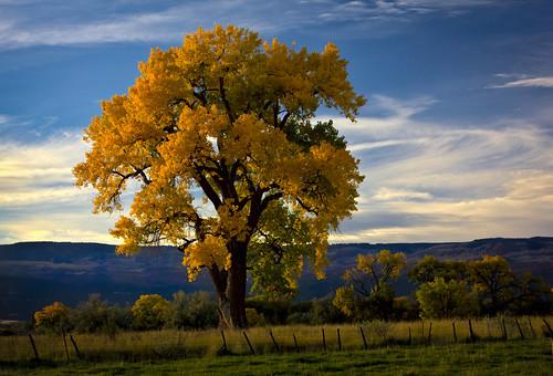 fall colorado cottonwood cedaredge grandmesa davidleeshort