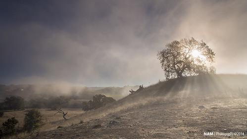 tree fog ngc sonomacounty