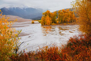 Fall Colors in Rain, Medano Creek | by Great Sand Dunes National Park and Preserve