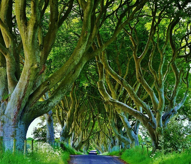 Dark Hedges, Armoy, Ireland