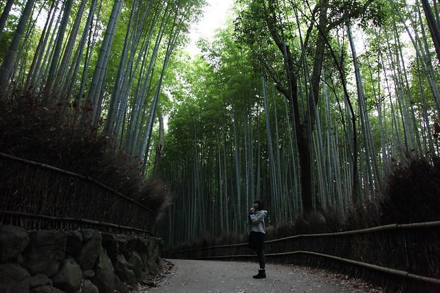 In Arashiyama Bamboo Grove