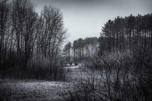 canoneos5dmarkiv ef70200mmf4lusm pasture meadow treelined trees pines field twigs bushes bush spring dreary cloudy grey gray selenium hidden