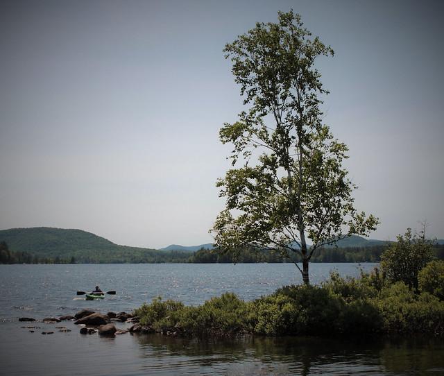 Kayak and tree