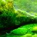 The nature's artistry- III : A macro series. by biswarupsarkar72