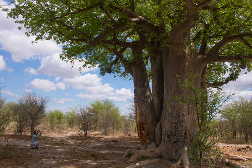 Andrew and the baobab tree | by rhombitruncated