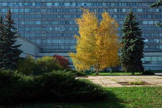 Autumn composition, Moscow University