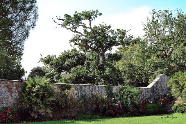 DSC_3699_-1 Parc et Jardins du Château de Lanniron