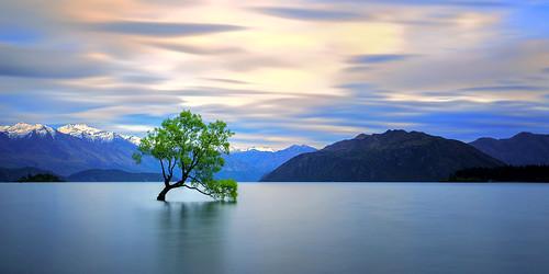 newzealand lake snow mountains tree sunrise spring otago wanaka