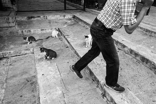 Cats, Istanbul   by A. adnan