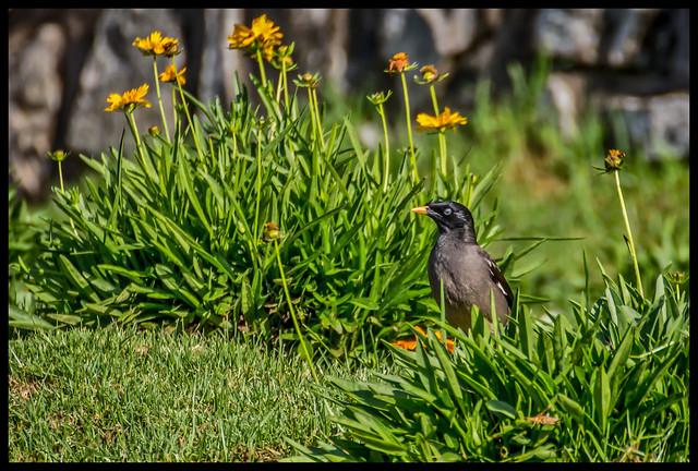 Bird in the bushes