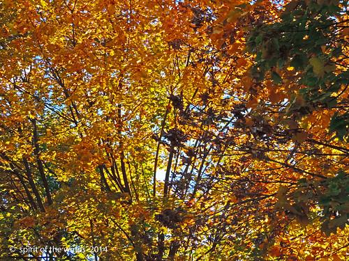 autumn fall otw nikonflickraward spokanewashingtonstate