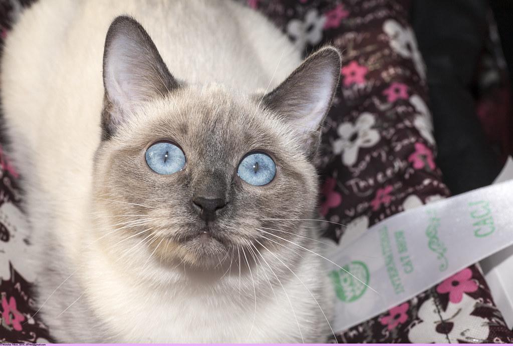 Клуб тайской кошки в москве эротические тв шоу