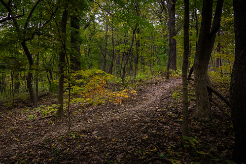 wood autumn trees brown green fall nature dark walking woods outdoor hiking path overcast trail shade 2014 palospark changeofcolor
