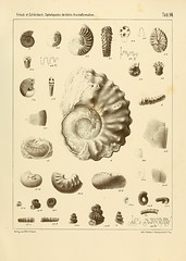cephalopodenderb00fric_0111