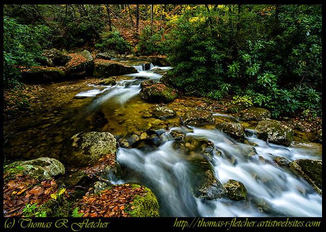 Kens Creek Cranberry Wilderness