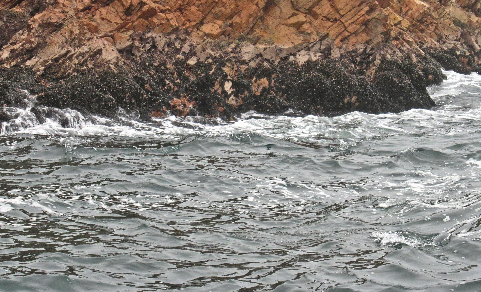Islas Ballestas 22