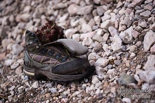 Alter Schuh | Projekt 365 | Tag 307
