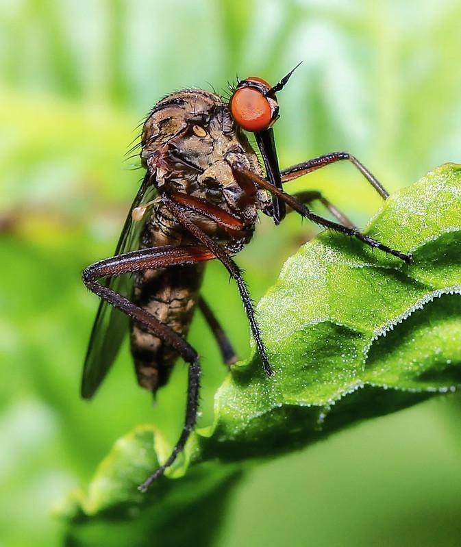stileto-fly