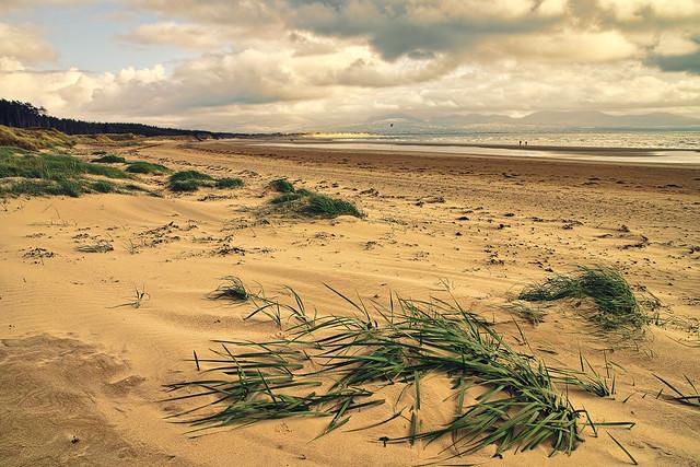 Grass on Newborough Beach.