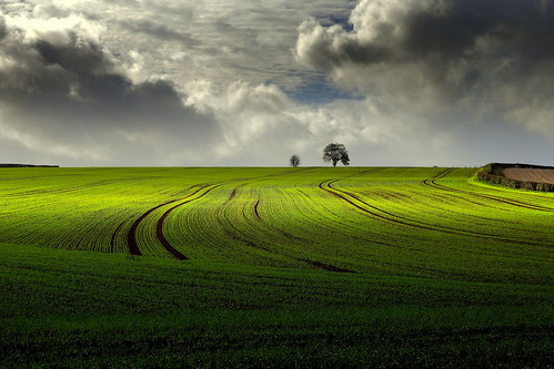 autumn trees light england sky cold color tree green nature beautiful field clouds canon landscape landscapes countryside colours view tracks perspectives peaceful gloucestershire fields autumnal treescape forestofdean furrows canonef2470mmf4lisusm canon6d ericgoncalves ominoussky's