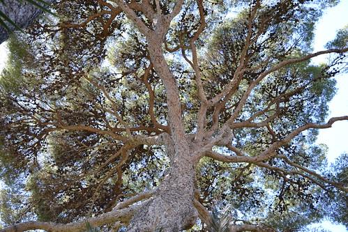 (13) Le Parc du Mugel et son jardin exotique - La Ciotat 32332542063_72e704f5df