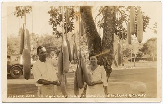 A couple from Coconut Grove Florida holding the fruit of their Kigelia tree (sausage tree).