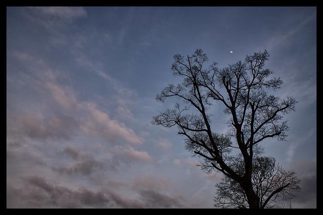Night tree.Software test DXO v4
