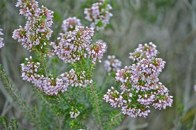 Flores de silvestres.