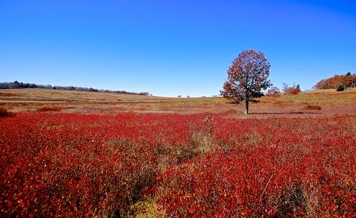 new travel sky fall landscape countryside fallcolor bright outdoor shenandoah bigmeadows shenandoahnationalpark