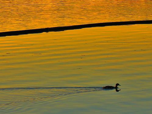 sunset lakewilcoxpark richmondhill ontario canada heartawards