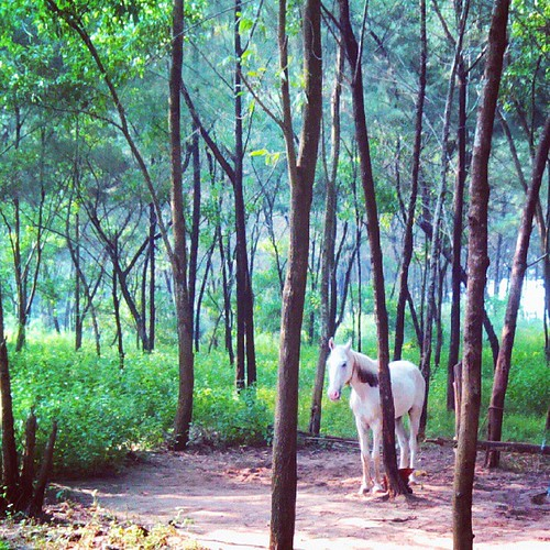 trees horse white square landscape personal meadow shade squareformat hudson nightmare mangalore yabbadabbadoo iphoneography instagramapp uploaded:by=instagram