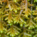 Liverworts by roe.nate