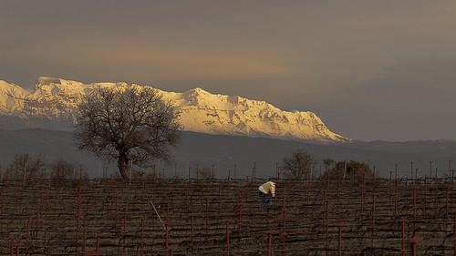 sunset mountain snow tree vineyard vines nikon outdoor dusk greece meditation farmer ioannina d3100