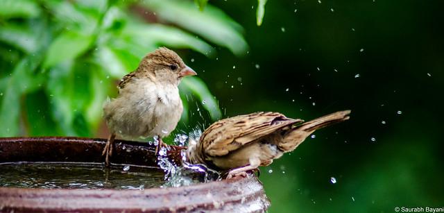The Clean Birds